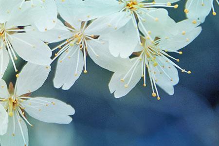 新春献礼,飞歌官方正版最新凯立德2014冬季版3421J0M(SP1)强势发布!安卓/WinCE系统适用